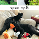 Save Kitty Cats – Litter For Good
