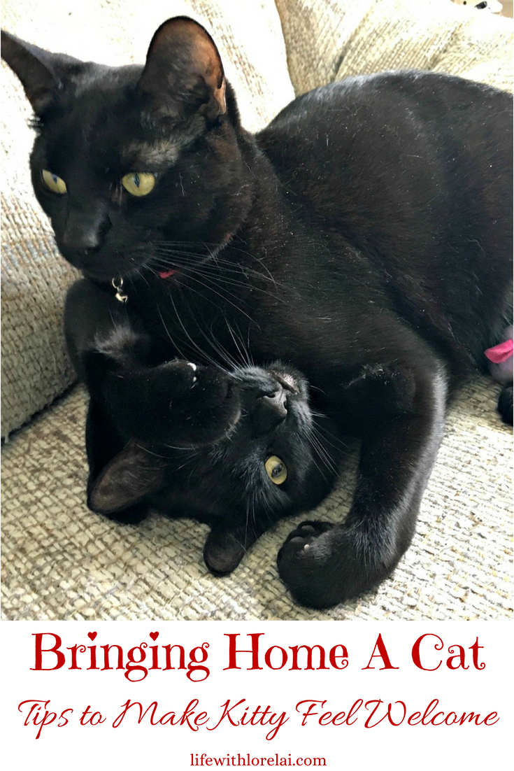 Are you bringing home a cat? Find great tips to make kitty feel welcome and safe in your home. Plus learn how you can help save millions of cats with the Litter For Good initiative from Cat's Pride. #ad #CatsPride #LitterForGood #cat #kitten