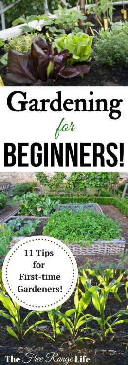 Tips and ideas for Spring gardening! Grow your garden. Plus, link up @ Home Matters w/ recipes, DIY decor, more. #Gardening #SpringGarden #HomeMattersParty