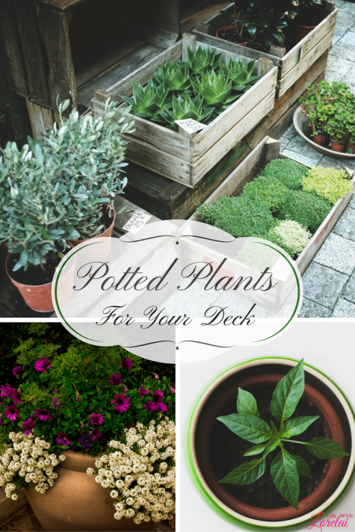 Celebrate National Garden Month with container gardens and potted plants to beautify your home. Linkup at #HomeMattersParty #ContainerGardens #PottedPlants